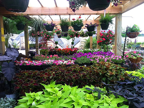 Crawford Nursery & Garden Center Odenville Alabama large plant warehouse, plants, trees, shrubs, flowers | 205.640.6824